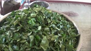 Pindaya Tea Leaves
