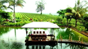 Relaxing at the Monte di Vino lodge - paradise don't you think?